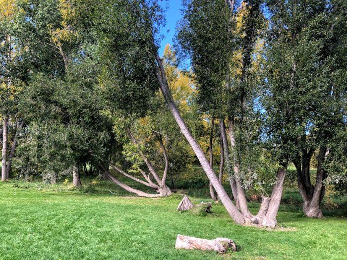 Climbing trees at Confederation Park