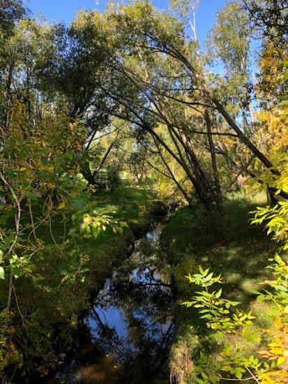 wetland stream in confederation park