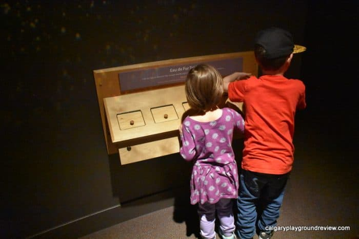 Glenbow Museum - Mavericks