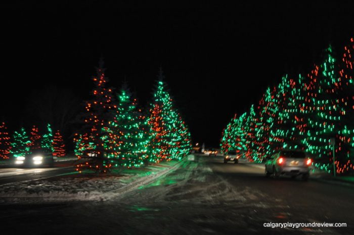 Trees at Spruce Meadows - Calgary's best Christmas Light Displays