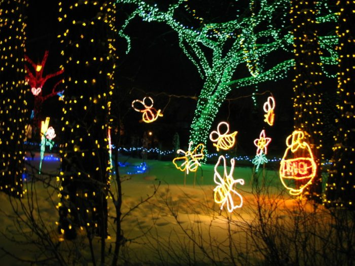 Zoolights - bees- Calgary's best light displays