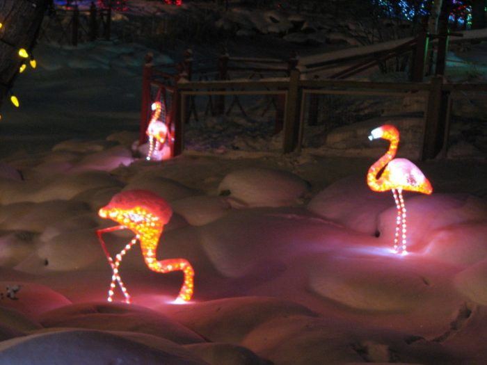 flamingos at Zoolights