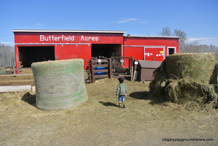 Butterfield Acres Petting Zoo