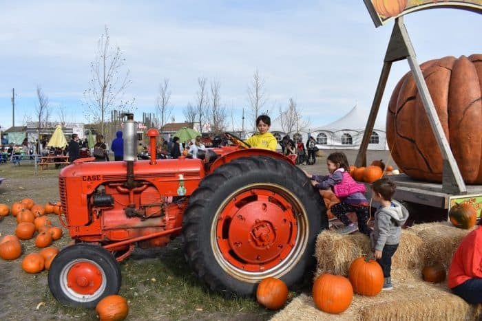 Cobb's Corn Maze Pumpkin Palooza - Things to do with kids in Calgary in the Fall