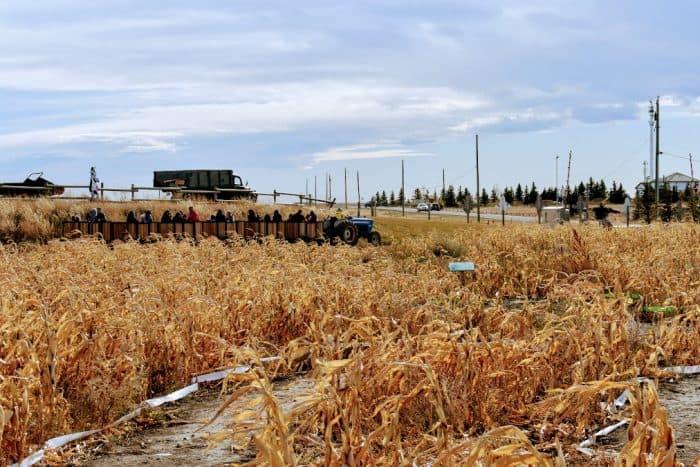 Tractor Ride through dry corn maze