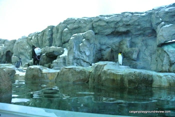 penguin plunge - Calgary Zoo