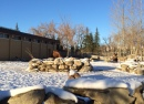 Calgary Zoo Winter
