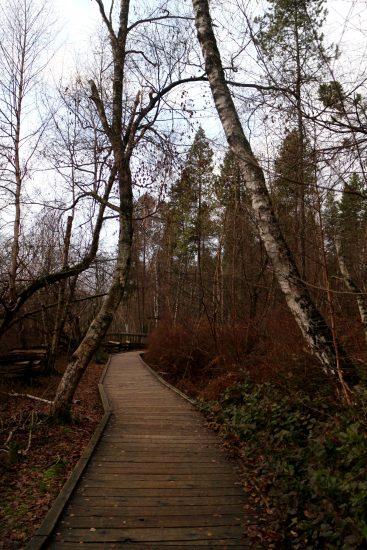 richmond-nature-park-3