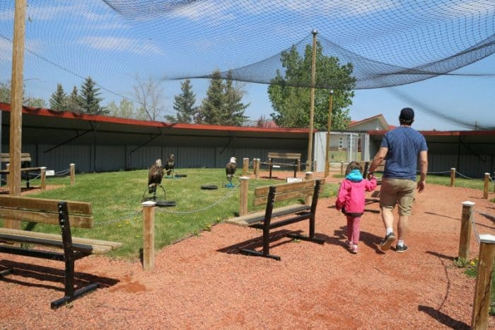 Birds of Prey - #albertastaycation - calgaryplaygroundreview.com