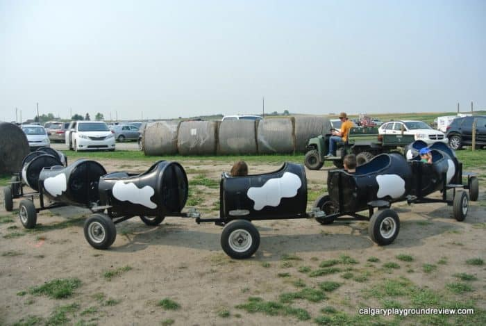 Calgary Farmyard Cow train