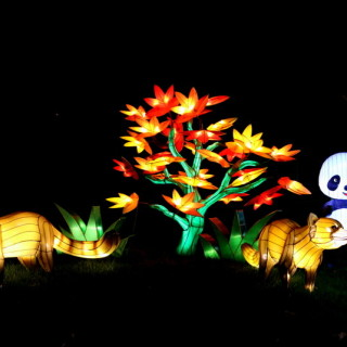 illuminasia at the Calgary Zoo