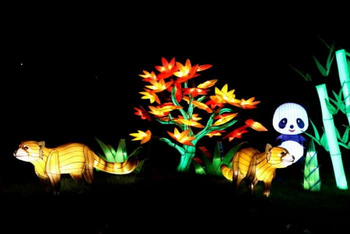Illuminasia at the Calgary Zoo
