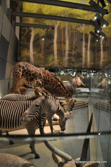 Smithsonian Museum of Natural History - Washington, DC