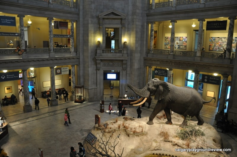 Natural History Museum New York Smithsonian