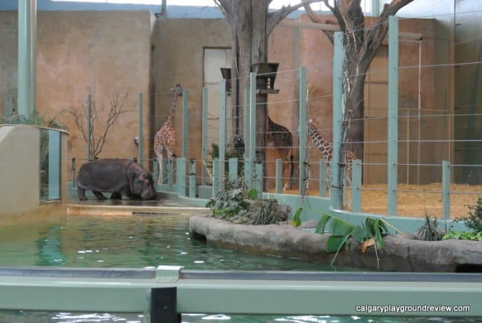 The Zoo Island at the Calgary Zoo – Destination Africa, Eurasia and the Conservatory
