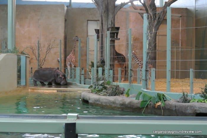 Calgary Zoo - Giraffes, Hippo