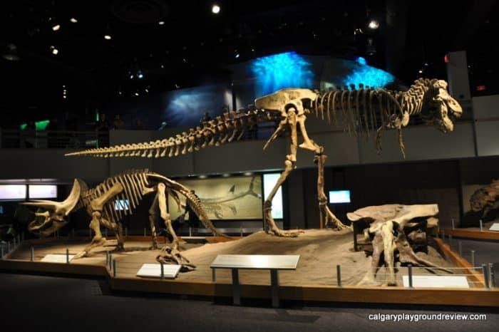 Dinosaur fossils - Royal Tyrrell Museum