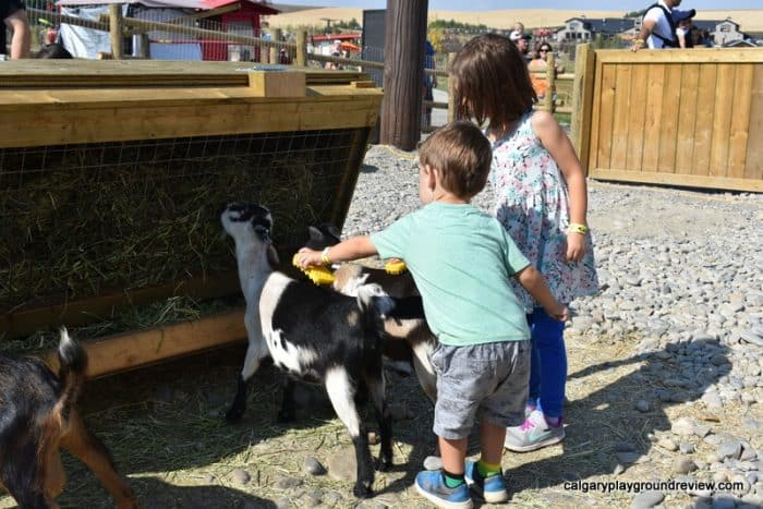 Kids petting a goat at Granary Road Active Learning Park