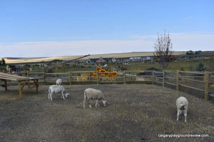 Sheep at Granary Road