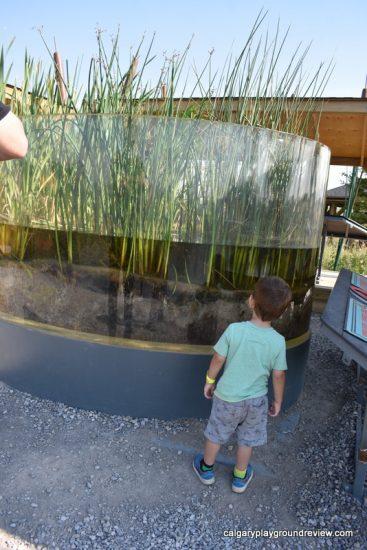 Wetland Terrarium