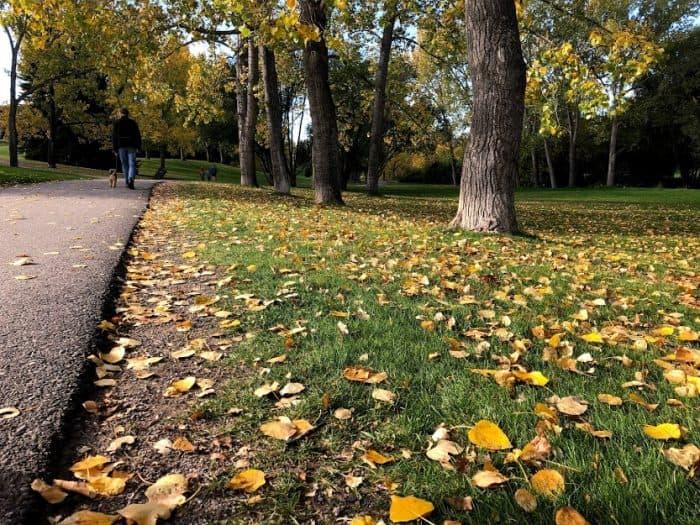 Fall Leaves in Calgary
