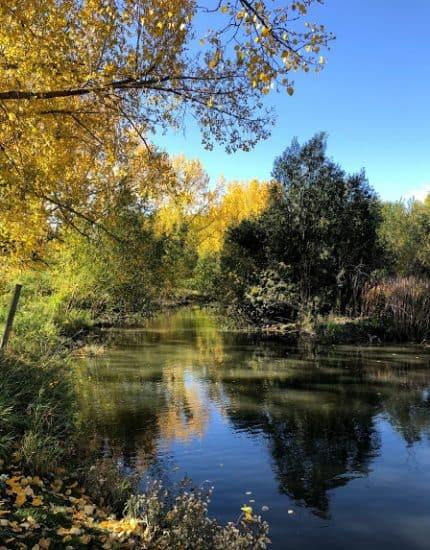 Confederation Park wetland pond